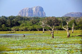 Yala_National_Park_(Sri_Lanka_2012)