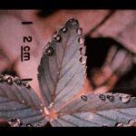 047 Leaf