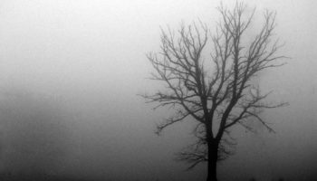 november_fog_by_joesr