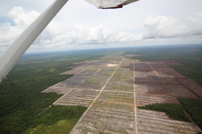 Palmöl in Borneo