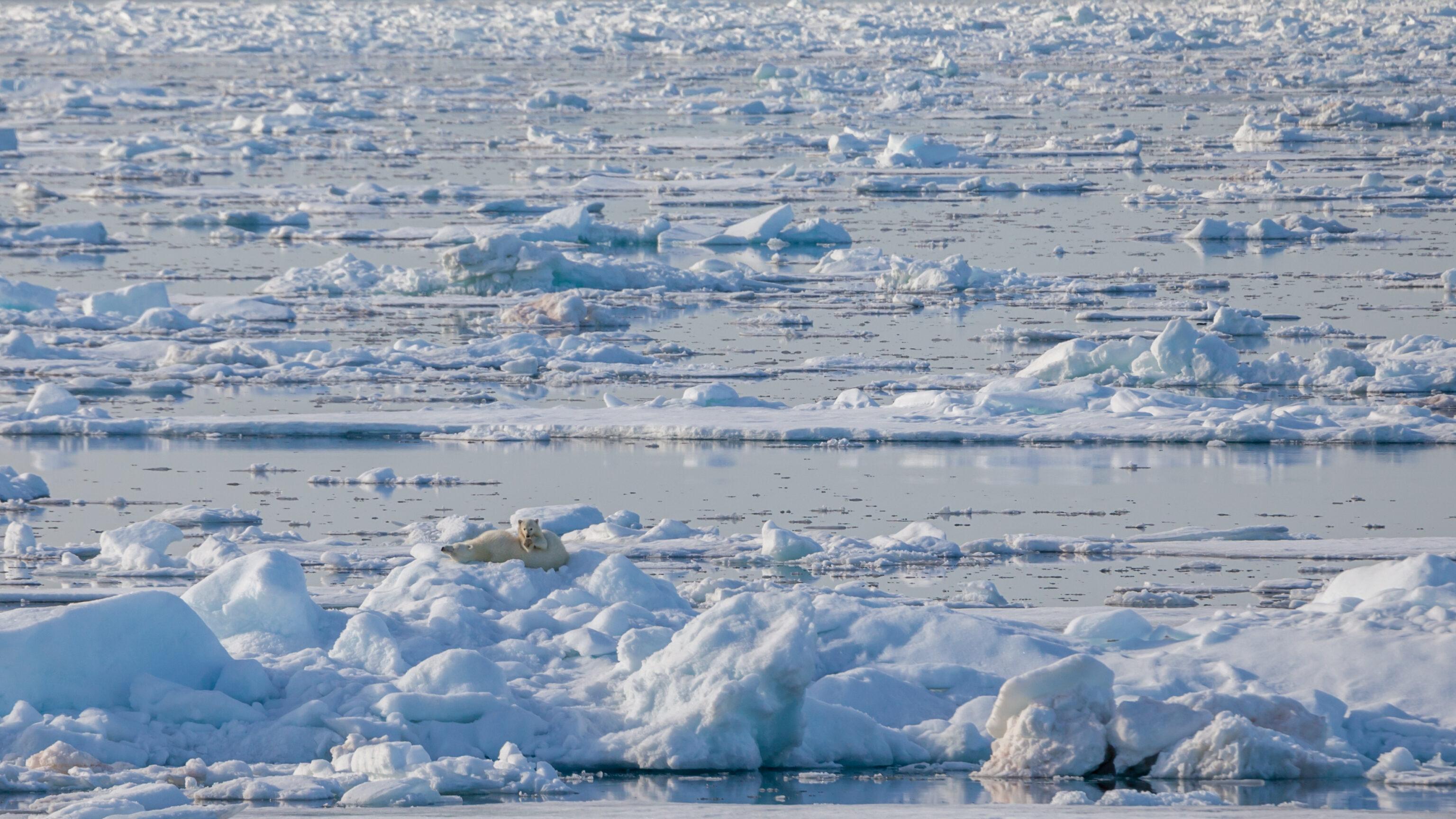 Der Arktische Ozean