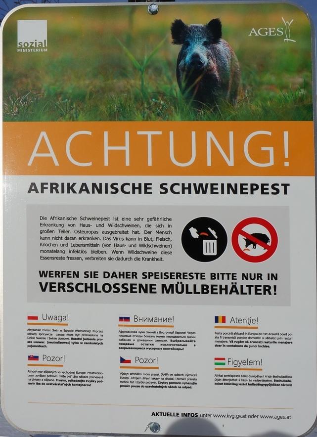 Afrikanische Schweinepest bald auch in der Schweiz?