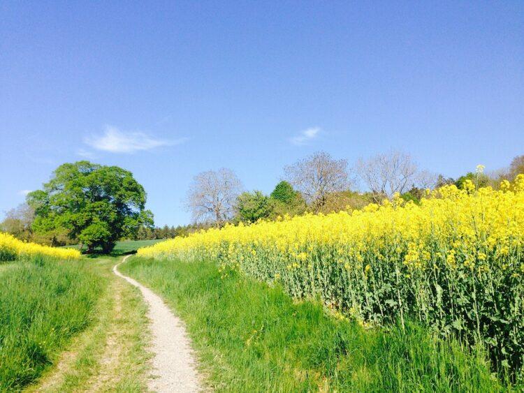"""Der Kanton Bern will Bioprodukte noch erfolgreicher machen. Dazu legt er den Schwerpunkt seiner """"Bio-Offensive"""" künftig nicht nur auf den Ausbau der biologischen Anbaufläche, sondern auch auf die Wertschöpfung."""