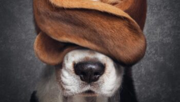 Tiere haben Rechte! Strafpraxis in der Schweiz